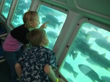 Kids looking at fish